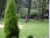 IMG_4161_zpstbnktp9r.jpg